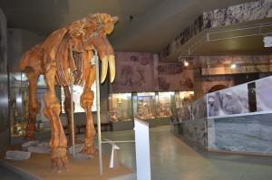 Смонтированный скелет динотерия